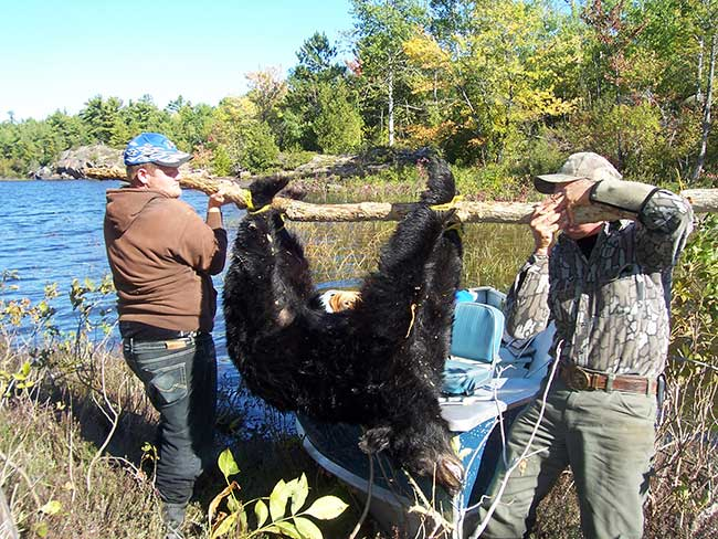Hunting canada fishing french river bear 39 s den lodge for Ontario non resident fishing license