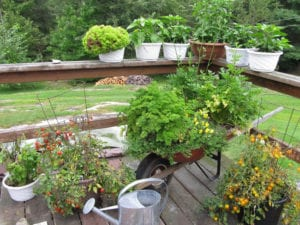 Organic Gardening, Green vegetables, Bear's Den Lodge French RIver