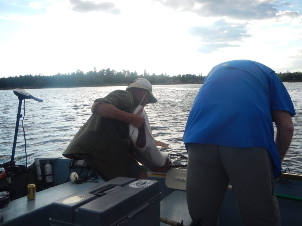 Fishing French River Musky, Muskie Canada