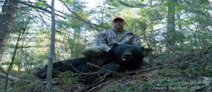 600 lb French River Ontario Black Bear during the 2016 Spring Hunt